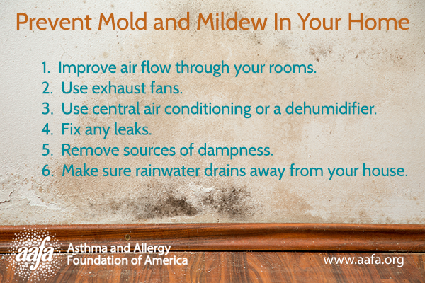 How To Prevent Mold And Mildew Buildup In Your Home